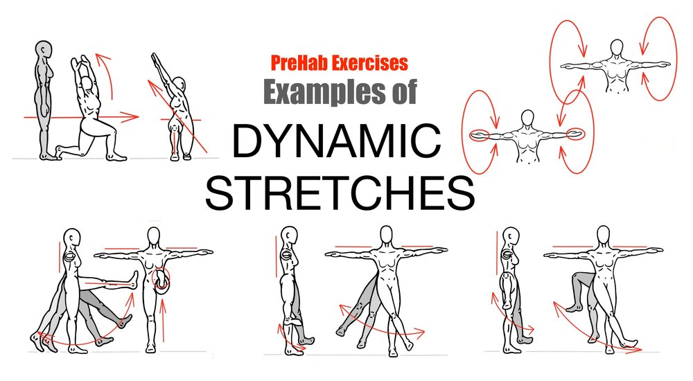 Dynamic Muscle Stretching